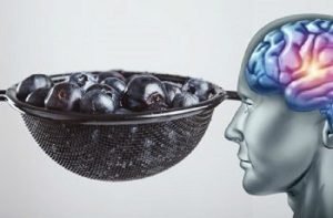 brain-350x230