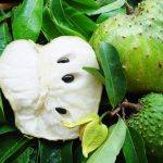 Benefits-Soursop-Leaves