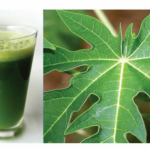 Have Papaya Leaf Juice And Cure These Health Issues