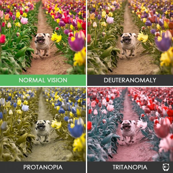 different-types-color-blindness-photos-69