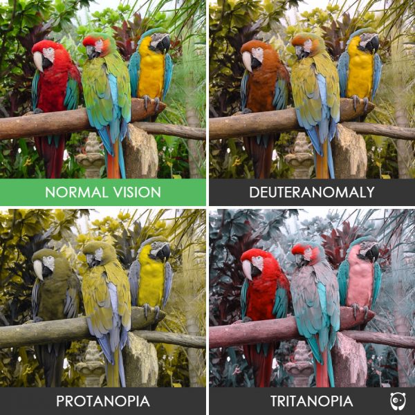 different-types-color-blindness-photos-75