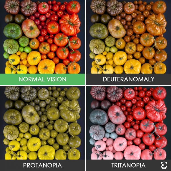 different-types-color-blindness-photos-76