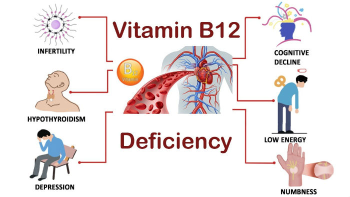 What Does Vitamin B12 Do For Cats