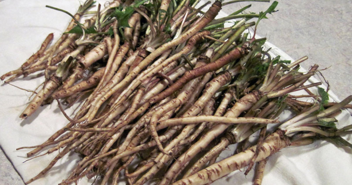 12-dandelion-root-kills-cancer-cells-fb