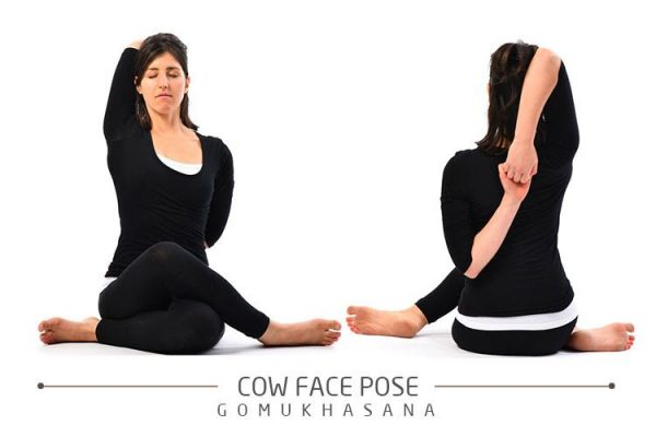 cow-face-pose22