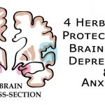 4 Herbs That Protect Your Brain From Depression, Anxiety and More