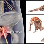 8 Exercises for Sciatica and Lower Back Pain Relieve